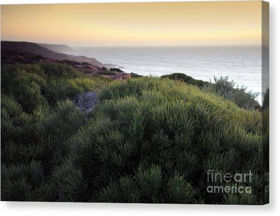 Bush At Twilight Canvas Print by Roberto Bettacchi