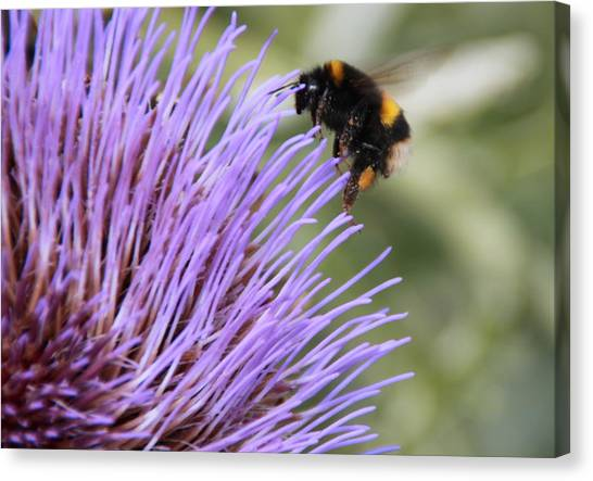 Busy Bee Canvas Print by Karen Grist