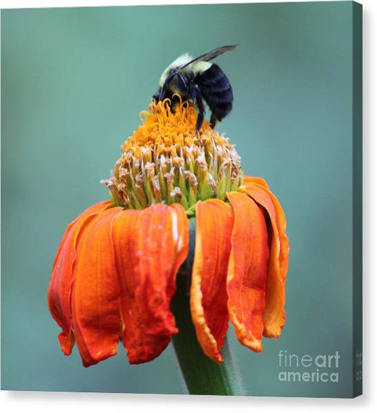 Busy Bee Canvas Print by Marilyn West