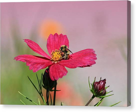 Busy Bee Canvas Print by Ronald Lafleur