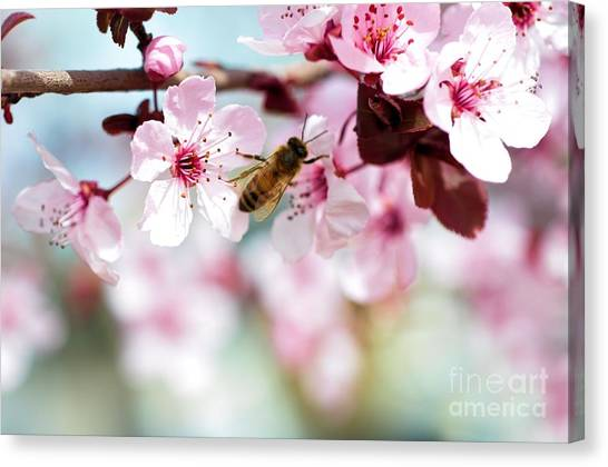 Busy Buzzing Around These Beautiful Blooms... Canvas Print