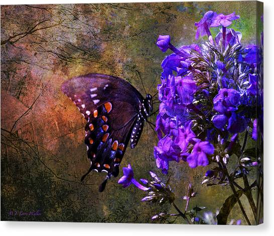 Busy Spicebush Butterfly Canvas Print