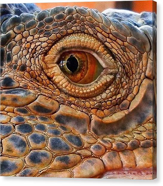 Iguanas Canvas Print - But As We Know, Beauty Is In The Eye Of by Tanya Sperling