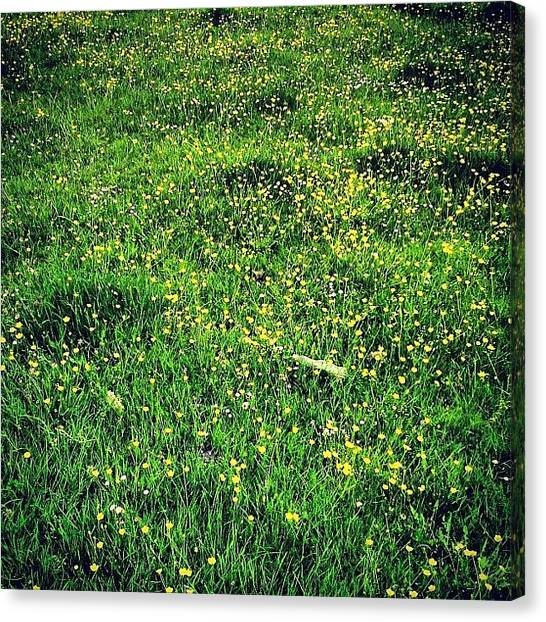 Social Canvas Print - Buttercups by Nic Squirrell