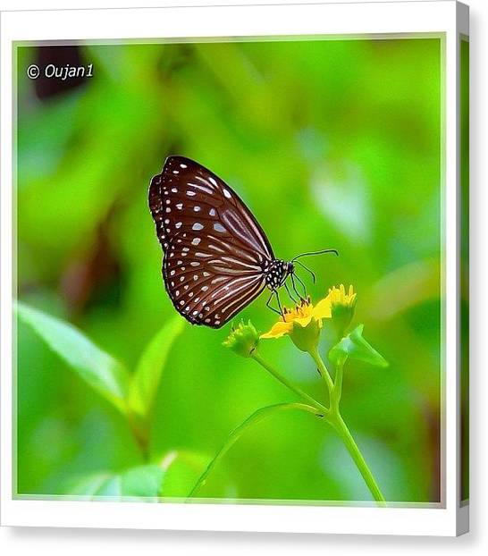 Ladybugs Canvas Print - Butterflies Are Sweet, Pretty, Delicate by Ahmed Oujan