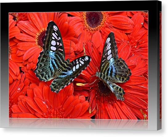 Butterflies On Red Flowers Canvas Print