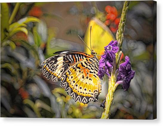 Butterfly 3 Canvas Print by Nathan Firebaugh