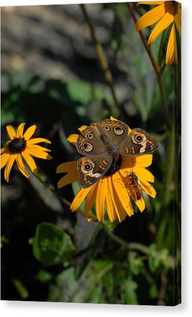 Butterfly 90 Canvas Print by Joyce StJames