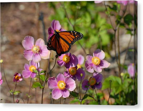 Butterfly 91 Canvas Print by Joyce StJames