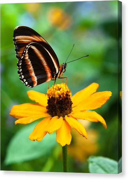 Butterfly And Flower Canvas Print