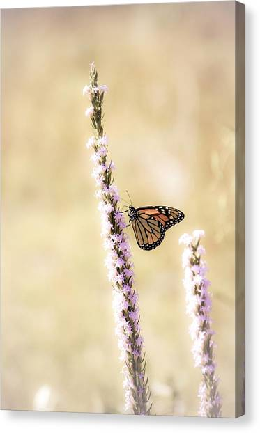Butterfly Canvas Print by Bill Martin