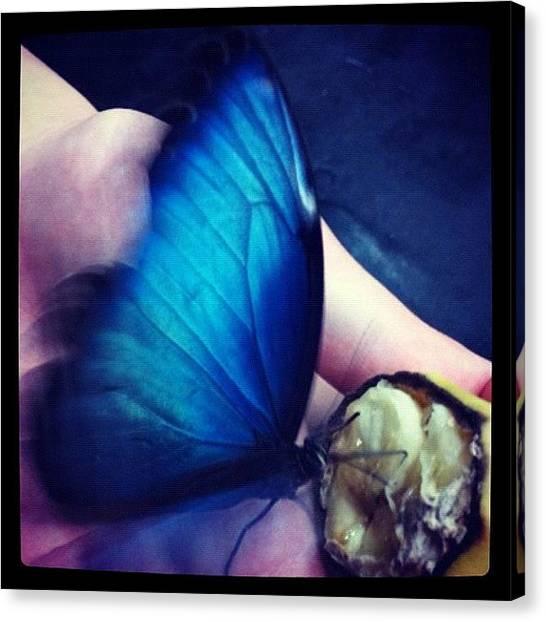 Bananas Canvas Print - #butterfly #blue #banana #followback by Sam Sana