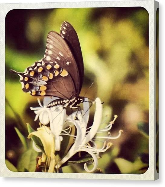 Maryland Canvas Print - #butterfly #chesapeakebay #maryland by Robyn Montella