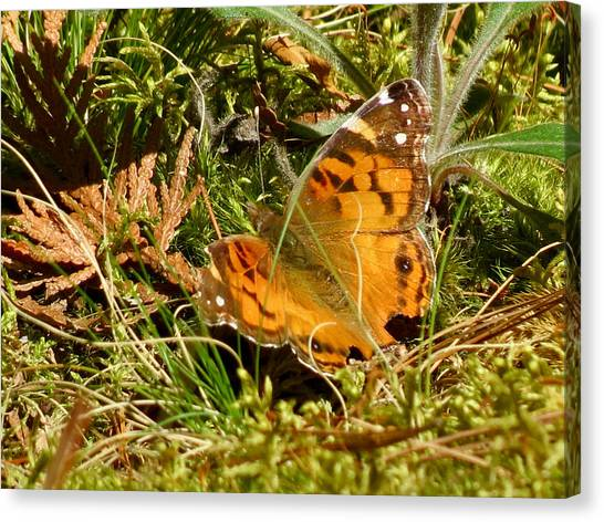 Butterfly In The Forest Canvas Print