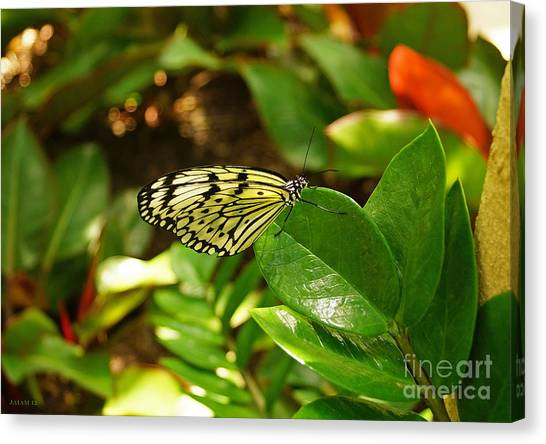Butterfly In Yellow And Black Canvas Print