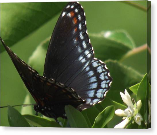 Butterfly Canvas Print by Katherine Woods