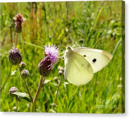 Caterpillers Canvas Print - Butterfly Kisses by Elizabeth Hernandez