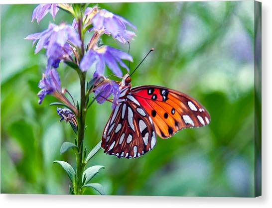 Butterfly Canvas Print by Linda Pulvermacher