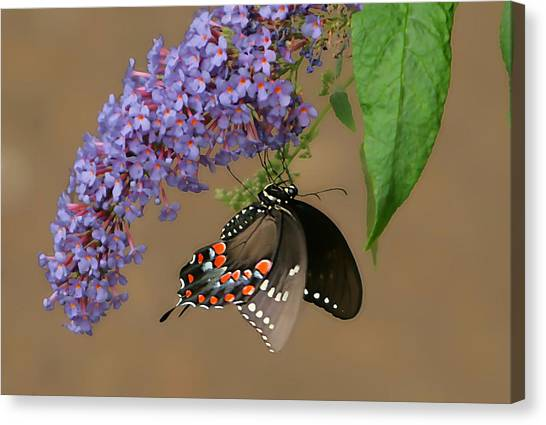 Butterfly Looking Up Canvas Print by Daamonturne