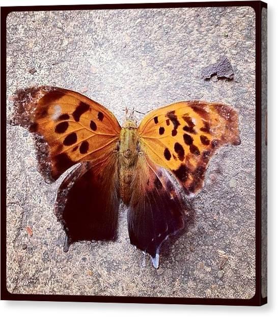 Berlin Canvas Print - Butterfly Love! by Berlin Green
