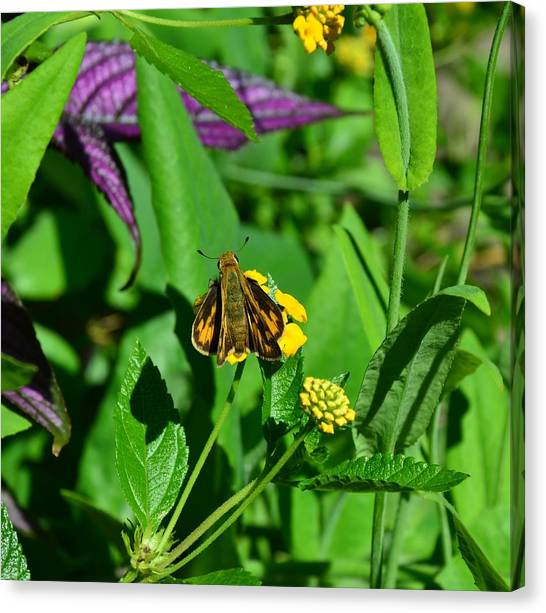 Butterfly Canvas Print by Mark Bowmer