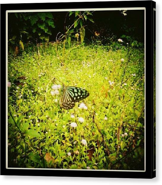 Fairies Canvas Print - Butterfly by Nawarat Namphon