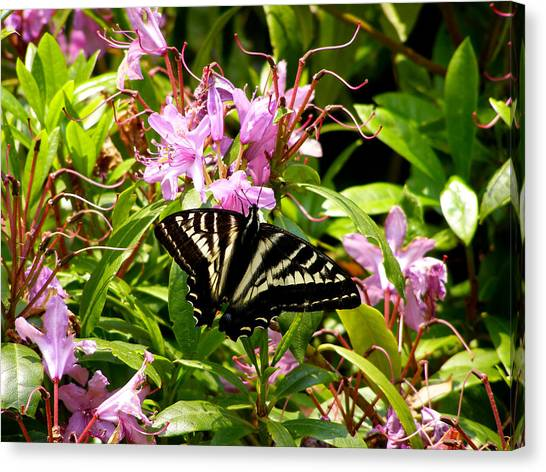 Butterfly On Flowers Canvas Print by Mark Caldwell