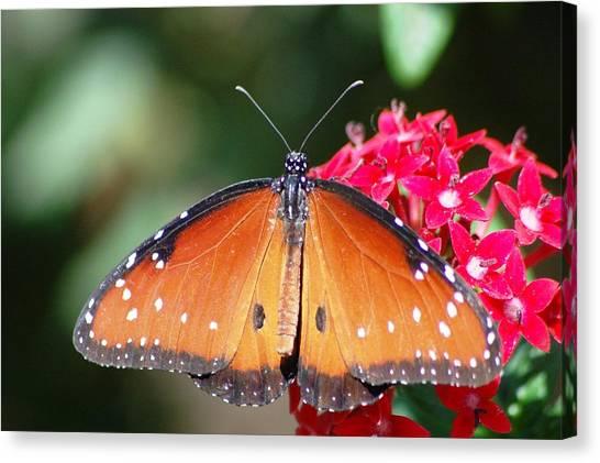 Butterfly On Pink Flower Canvas Print by Meeli Sonn