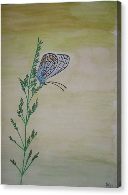 Butterfly Canvas Print by Silvia Louro
