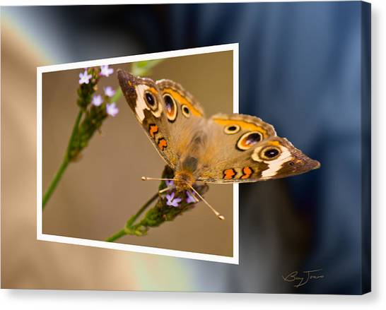 Butterfly Stepping Out Canvas Print by Barry Jones