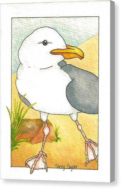 C. Gull Canvas Print