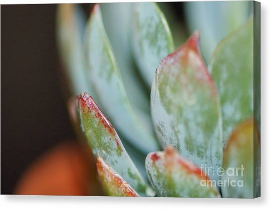 Cactus 1 Canvas Print by Melissa Haley