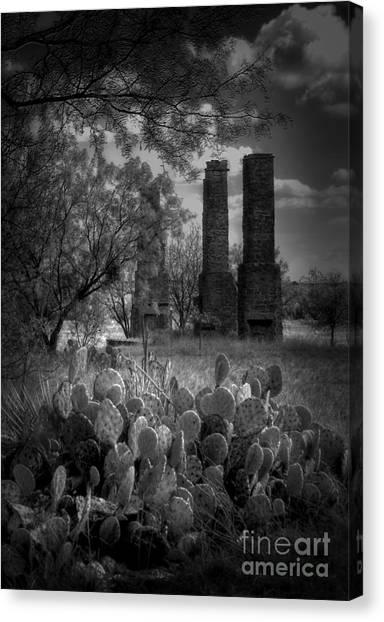 Cactus At Fort Phantom Hill Canvas Print
