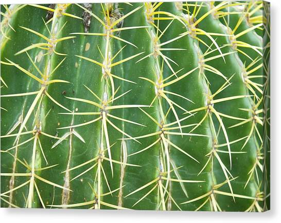Cactus Close Trouble Canvas Print by Dietrich Sauer