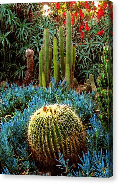 Cactus Gardens Canvas Print by Timothy Bulone