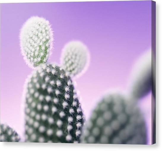 Cactus Plant Spines Canvas Print by Lawrence Lawry