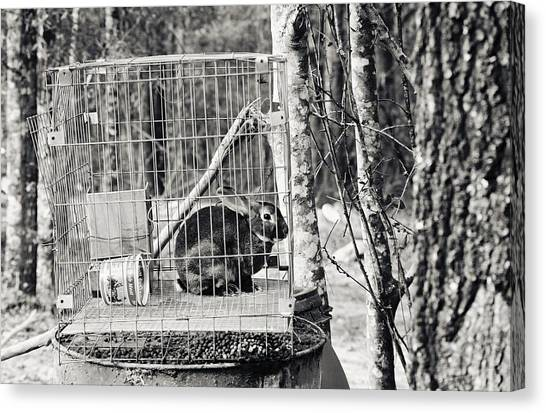 Caged Rabbit Canvas Print by Floyd Smith