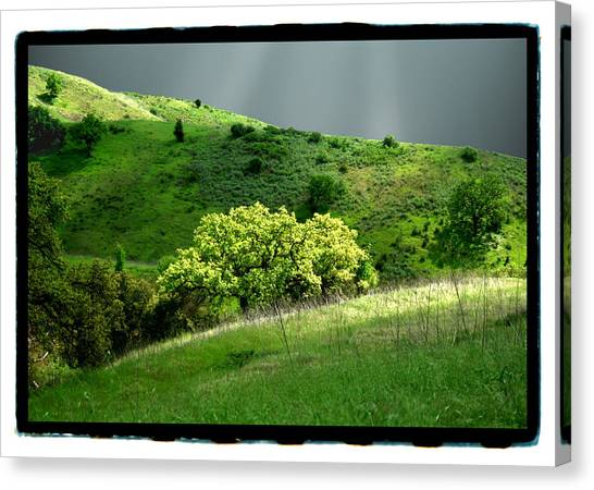 Calabasas Meadow After The Storm Canvas Print by Noah Brooks