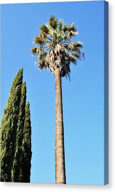 California Palm Canvas Print by Todd Sherlock