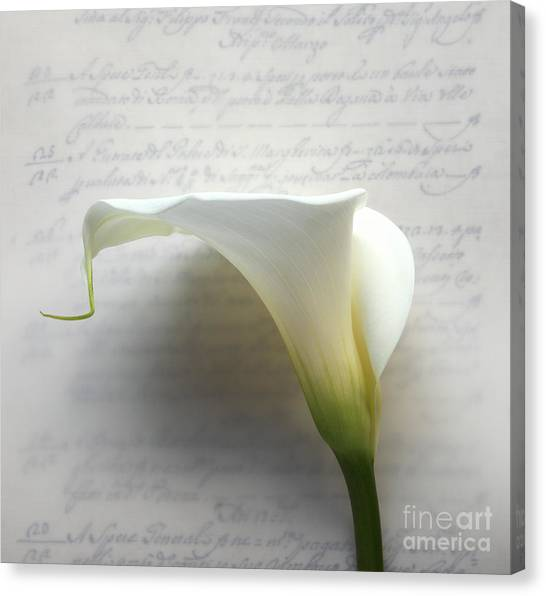 Calla Lily On Old Script Writing Canvas Print by Ruby Hummersmith