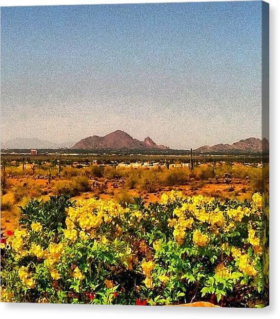 Arizona Canvas Print - Camelback Mountain. And Yellow by John Schultz
