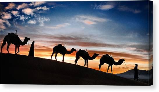 Camels - 2 Canvas Print