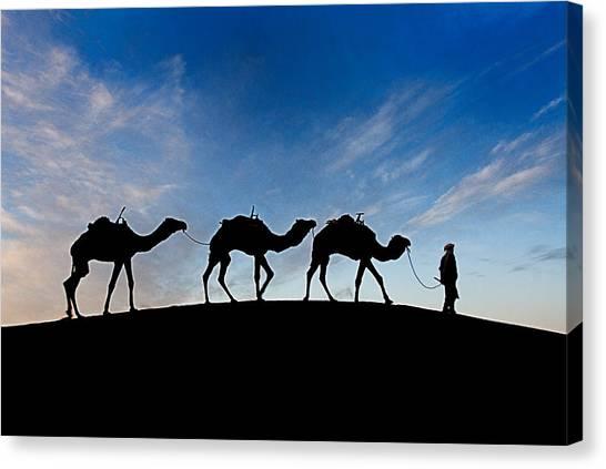 Camels - 3 Canvas Print