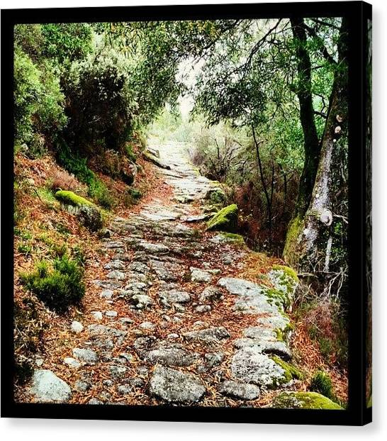 Forest Paths Canvas Print - Caminho by Roberto Tubio