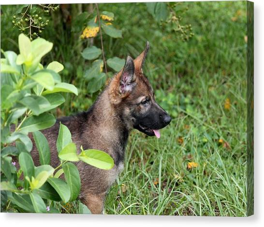 Camouflage Puppy Canvas Print by Christean Ramage