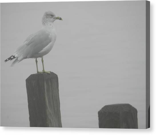 Camouflaged Seagull Canvas Print by Dennis Leatherman