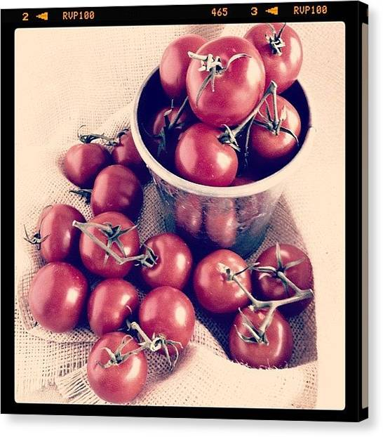 Tomato Canvas Print - Campari Tomato Still-life #tomatoes by Lynne Daley
