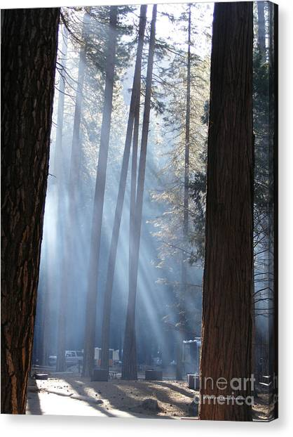 Campfire Smoke Through The Trees Canvas Print