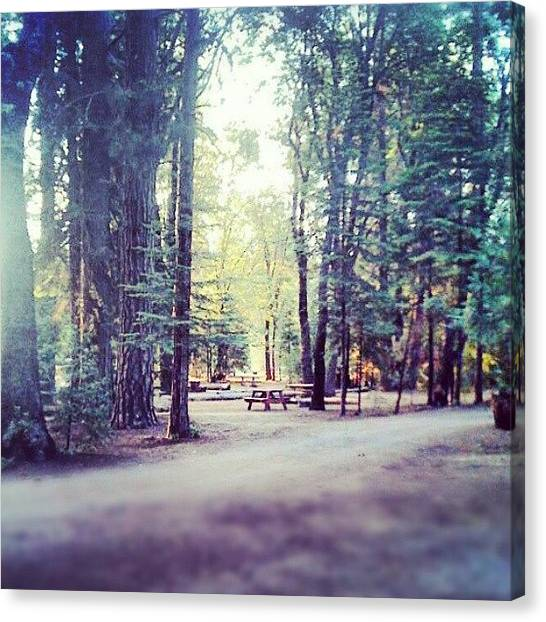Redwood Forest Canvas Print - Camping Trip In The Redwoods Wiyh The by Karen Clarke