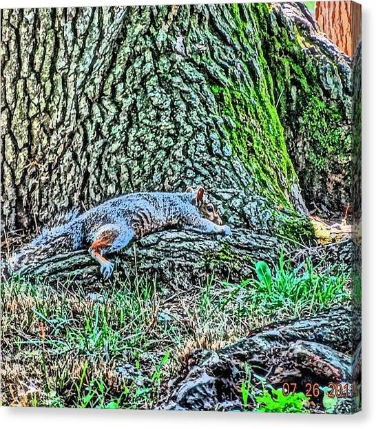 Squirrels Canvas Print - Can You Find The #squirrel ?? #nofilter by Zyrus Zarate